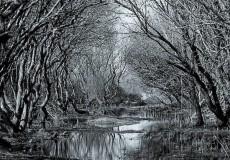 The Bleak Wood
