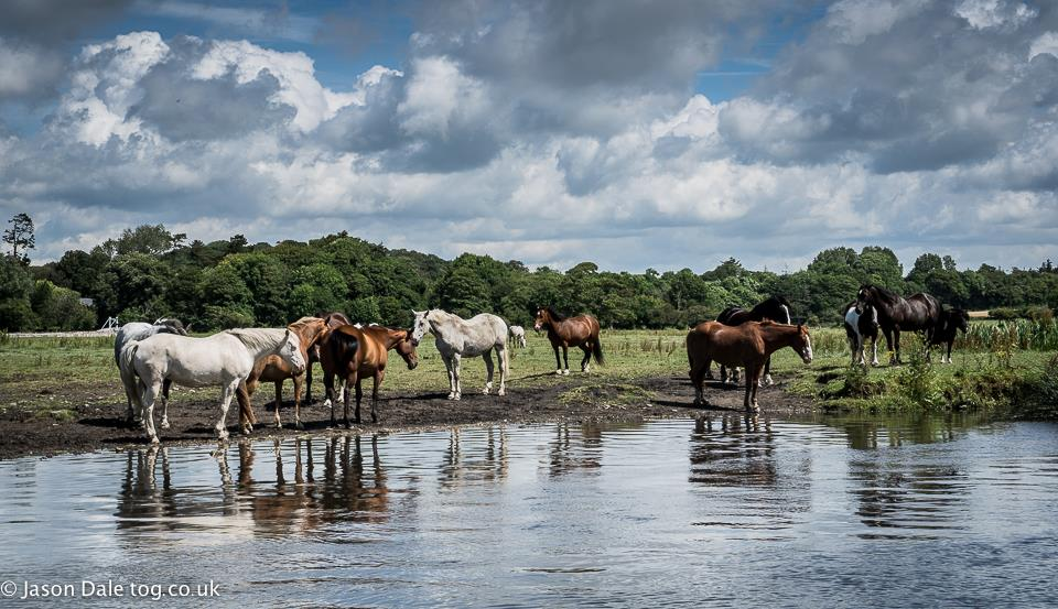 Horse Reflections At Ogmore Castle