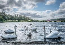 Sandy Park Swans