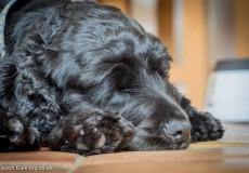 Daisy Dreaming