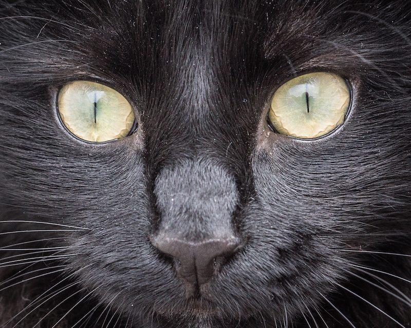 Winston Cat The Third