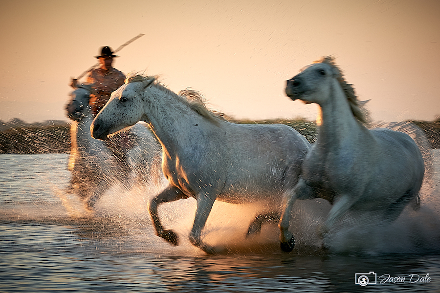 White Horses Of Carmargue