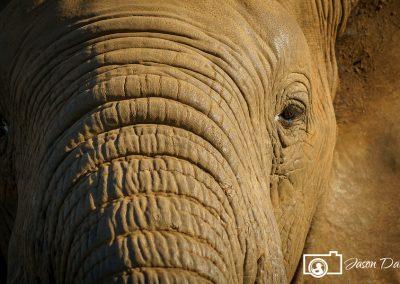zimanga-elephant