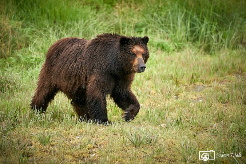 Pack Creek Bear