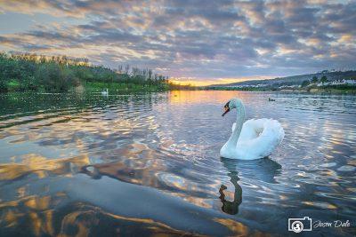 Sandy Water Park Swans