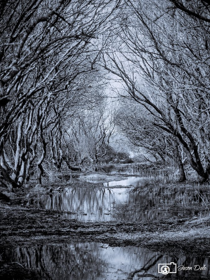 Kenfig Wood